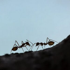 morfische velden van een mierenhoop