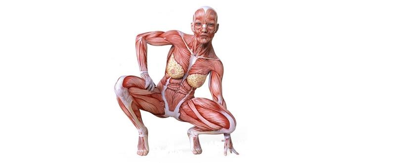 spieren_vrouwelijke_anatomie
